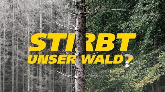 Der Stamm eines abgestorbenen Baumes trennt das Bild in zwei Hälften: links ein toter Wald, rechts ein lebendiger, grüner Wald. Schrift: Stirbt unser Wald?