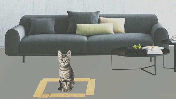 Eine Katze sitzt vor einem Sofa innerhalb eines auf dem Boden markierten Rechtecks.