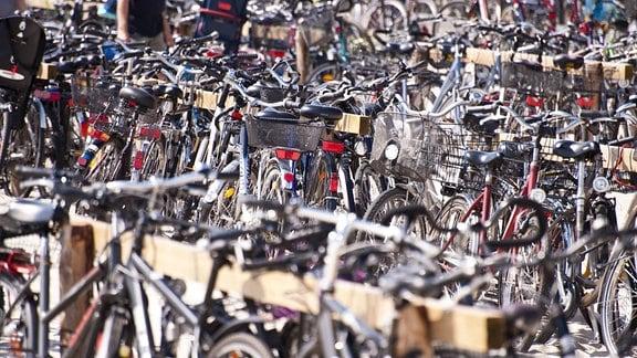 Viele Fahrräder sind an Fahrradständern aus Holz angelehnt, Räder im Vordergrund unscharf