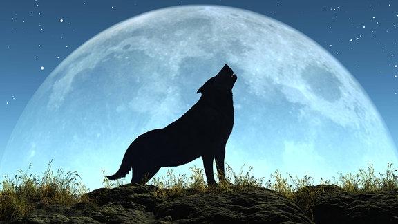 Vollmond Wolf heulen
