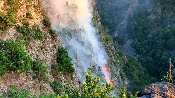 Waldbrand an einem Berg