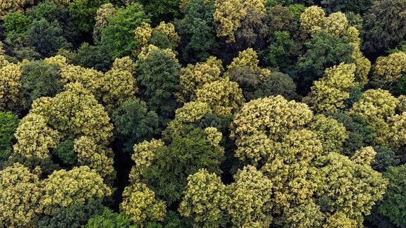 Blick von oben auf einen Wald.