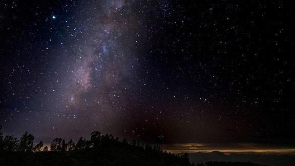 Sternenhimmel über einem Wald