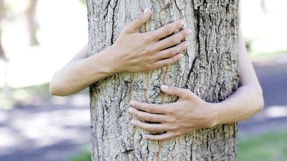 Baum Umarmung.