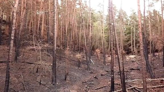Spuren eines Waldbrandes