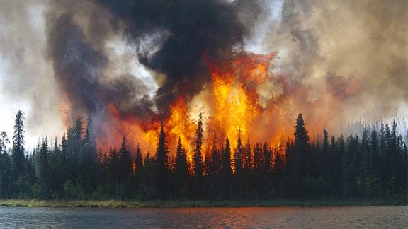 Waldbrand im Kenai Wildlife Refuge in Alaska