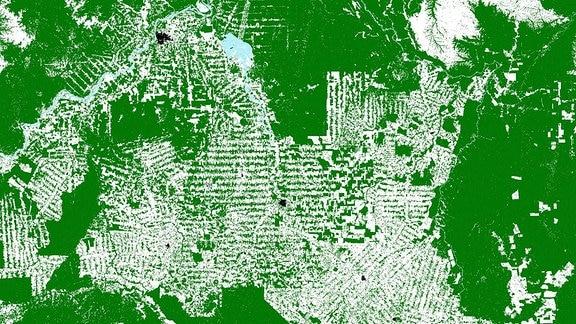TDX-Waldkarte Abholzung Brasilien