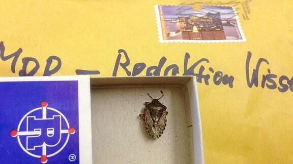 auf einem braunen Umschlag mit Briefmarke liegt eine Streichholzschachtel, darin ein dickes Insekt.