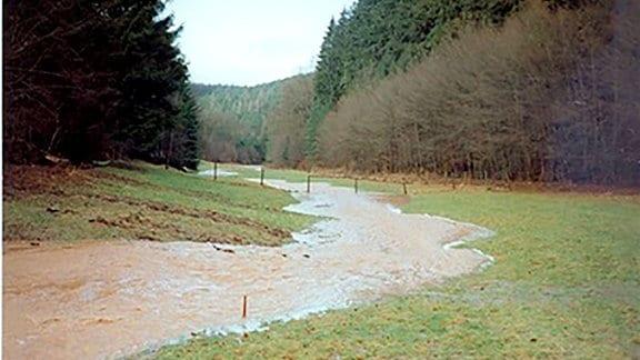 Ein Bach mit Hochwasser fließt über eine Wiese, daneben ist Wald