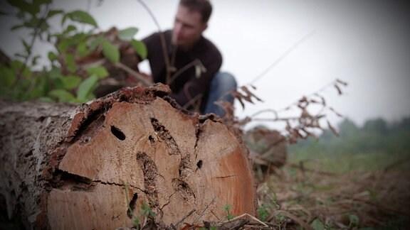 Ein gefällter Baumstamm mit Löchern