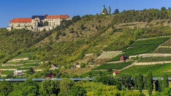 Herzoglicher Weinberg in Freyburg (Unstrut)