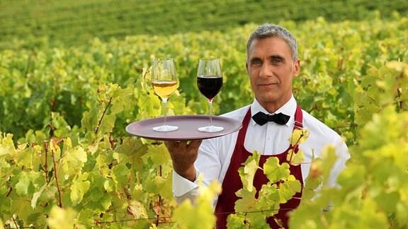Weinlese Burgund