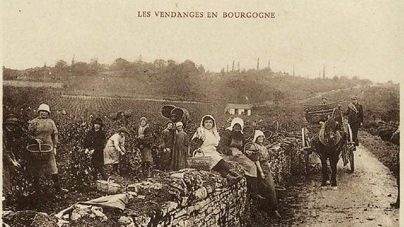 Postkarte Weinlese im Burgund