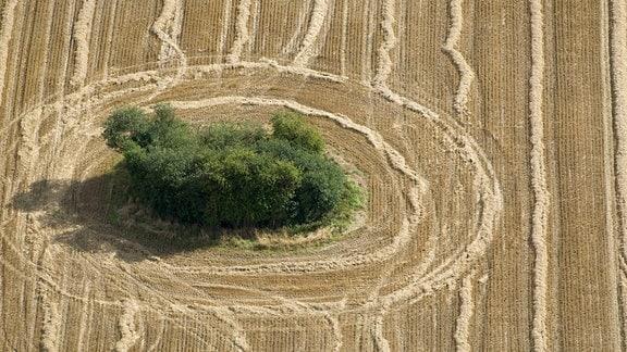 Abgeerntetes Weizenfeld mit kleinem Wäldchen.