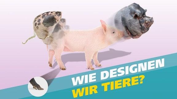 Grafik - Wie designen wir Tiere - Veränderung von Merkmalen