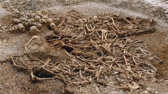 Ein Grabfeld mit zahlreichen Skelettteilen, Knochen und Schädeln.