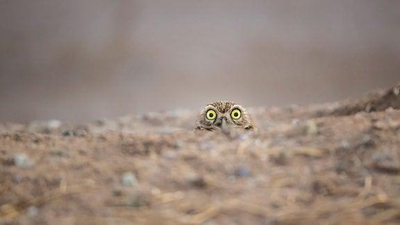 Wildlife-Gewinner