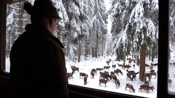 Mann betrachtet Wildtiere