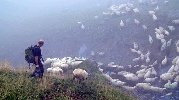 Filmszene: Ein Schafhirte mit vielen, durch einen Punkt markierten wollen Schaftieren geht eine Almwiese herunter, Berglandschaft, leicht nebelig