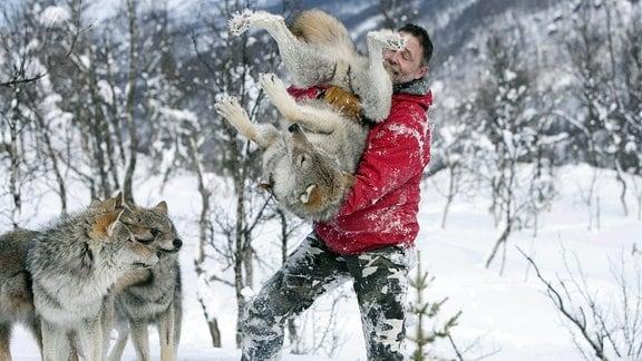Ein Tierpfleger mit roter Jacke im Polarzoo mit viel Schnee ringsherum, tollt mit zahmen Wölfen im Schnee herum: Packt einen Wolf und hebt ihn freudig hoch.