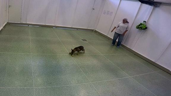 Wolfwelpe schnappt Ball