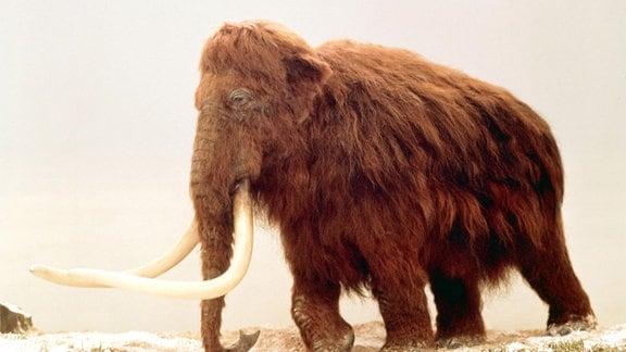 Prähistorische Rekonstruktion eines Wollmammuts