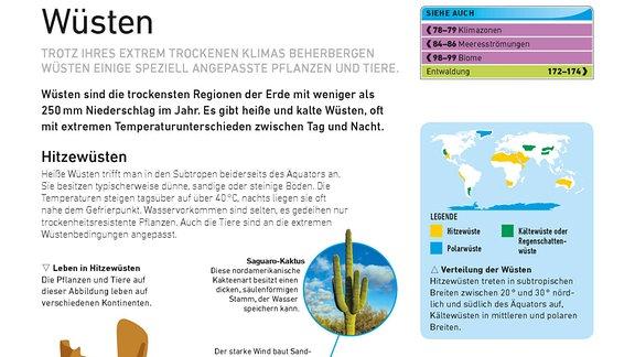 Die Seite zeigt die Zeichnung einer Wüstenlandschaft, auf der Pflanzen und Tiere markiert sind, die jeweils mit einem Foto detailreicher gezeigt werden. Bildlegenden und eine Weltkarte mit der Verbreitung von Wüsten erleichtern das Verstädnis.