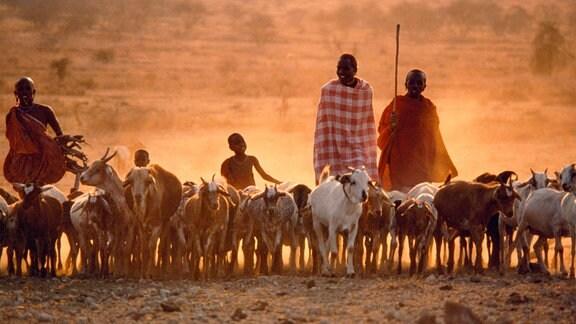 Erwachsene und Kinder bei einer Ziegenherde in einem savannenartigen Gebiet, Frontalaufnahme, abendliche, warme Lichtstimung