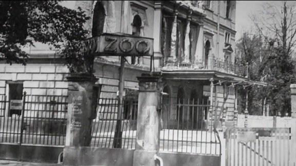 Der Zoo in Dresden um 1945.