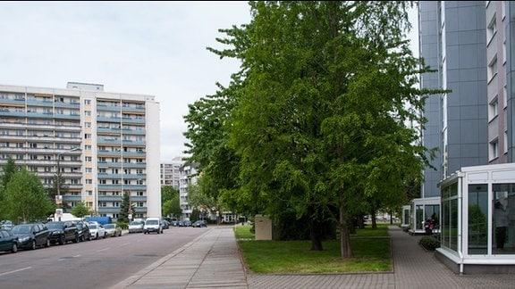 Renovierte Plattenbauten mit grünen Außenanlagen.