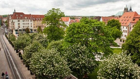 Erfurt Hirschgarten