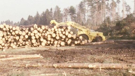 Baumstämme liegen auf einem Stapel auf einer gerodeten Fläche.