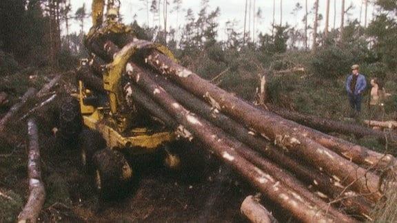 Mit schwerem Gerät werden umgefallene Bäume aus einem Wald entfernt.