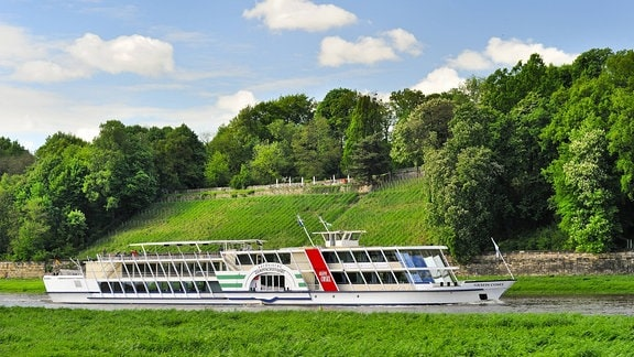 Raddampfer Gräfin Cosel auf der Elbe vor dem Elbhang mit Weinanbau am Loschwitzer Ufer