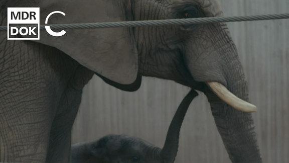 Die Stimme der Elefanten
