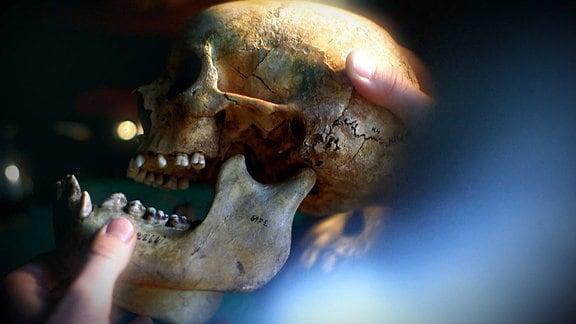 Ein Schädel für Darwin