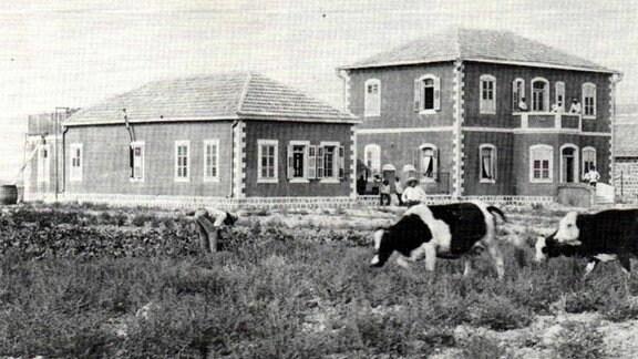 Haus und davor stehen Kühe.