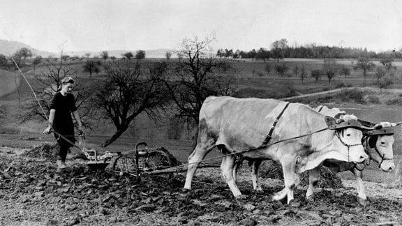 Bäuerin mit Ochsen-Pflug