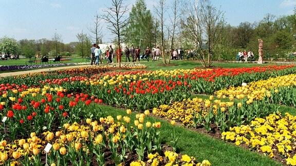Bei strahlendem Sonnenschein und Temperaturen um 20 Grad Celsius zog es viele Cottbuser schon am Eröffnungstag, 29.04.1995, zum Gelände der Bundesgartenschau (BUGA).