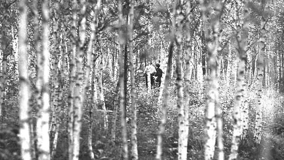 Blick durch die Stämme eines dichten Birkenwalds auf ein Pärchen.