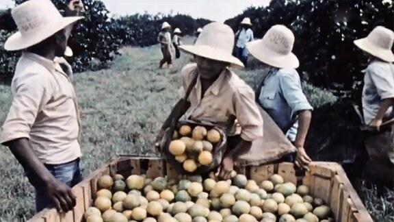 Die Südfrüchte kommen