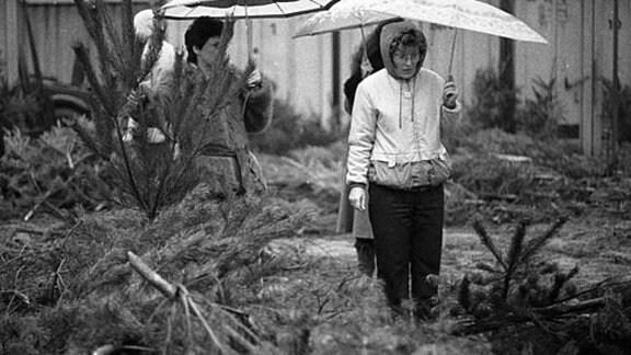 Frauen mit Regenschirmen suchen sich einen Weihnachtsbaum in einem Weihnachtsbaum-Verkauf aus - in den 80-er Jahren in Leipzig