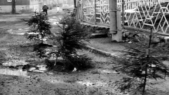 Tannenbäume wurden in Schlaglöcher gepflanzt