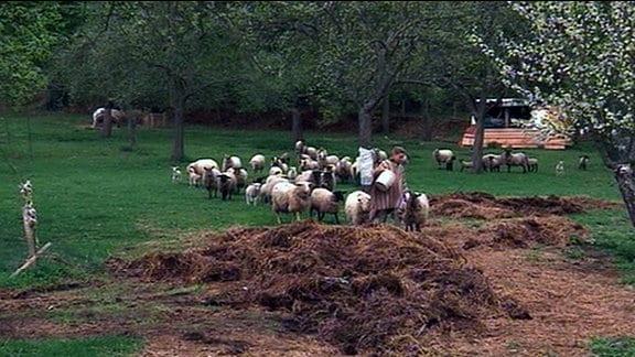 Eine Frau mit Schafen auf einer Wiese