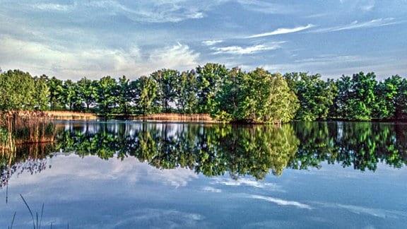 Wasser, Bäume
