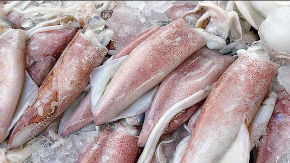 Tintenfische auf Eis