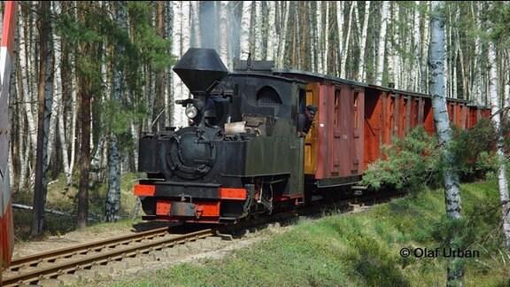 Schmalspurbahn in einem Birkenwald