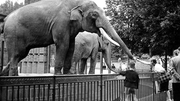 Ein Elefant streckt seinen Rüssel einem Mädchen entgegen.